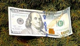 Крупный план дерева денег Стоковые Изображения