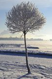 Крупный план дерева Стоковое Изображение RF