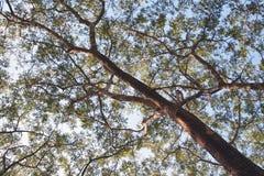 Крупный план дерева Стоковое Изображение