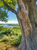 Крупный план дерева Стоковые Фотографии RF
