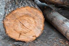 Крупный план деревянных журналов сброшенных на том основании Стоковые Изображения RF