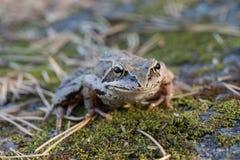 Крупный план жабы Стоковая Фотография RF