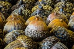 Крупный план жолудей Стоковые Фото
