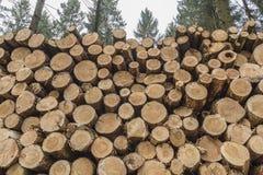 Крупный план журналов деревьев в природе Стоковые Фотографии RF