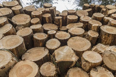 Крупный план журналов деревьев в природе Стоковая Фотография RF