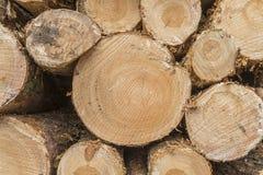 Крупный план журналов деревьев в природе Стоковые Изображения