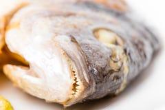 Крупный план зажаренной головы морского волка Стоковая Фотография