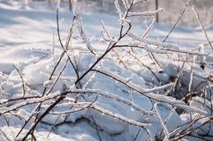 Крупный план замороженных хворостин Стоковое Изображение