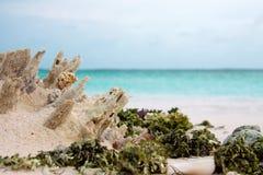 Крупный план засорителя моря, раковин и мальчишкаа моря на пляже с белым песком и нашивки голубой морской воды Стоковые Фото