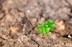 Крупный план зеленого растения растя в сухой почве пустыни Стоковые Изображения