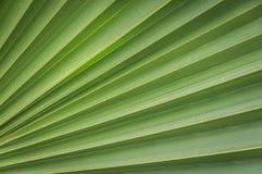 Крупный план зеленых листьев ладони Стоковое фото RF