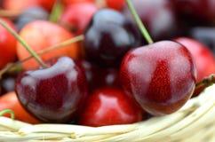 Крупный план зрелых, свежих и сладостных вишен в плетеной корзине Стоковое фото RF