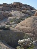 Крупный план иконических горных пород и заводов пустыни с разнообразными текстурами Стоковое Изображение RF