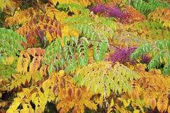 Крупный план листьев осени Стоковое фото RF