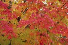 Крупный план листьев осени Стоковые Фото
