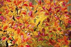 Крупный план листьев осени Стоковые Изображения
