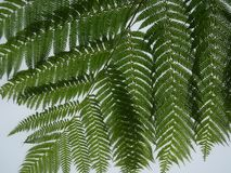 Крупный план листьев папоротника Стоковые Фотографии RF