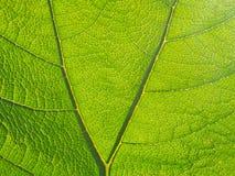 Крупный план листьев Стоковое Изображение RF