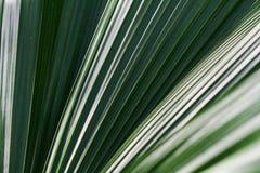 Крупный план лист папоротника Стоковое Фото