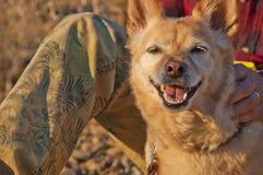 Крупный план и скрепление стороны собаки с предпринимателем Стоковые Изображения