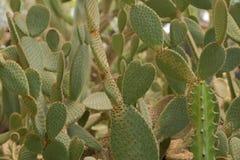 Крупный план кактуса Стоковое фото RF