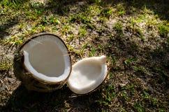 Крупный план 4 кокоса Стоковые Изображения