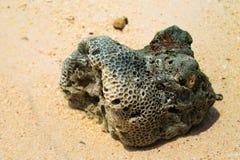 Крупный план коралла Стоковая Фотография
