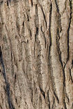 Крупный план коры дерева Стоковая Фотография RF