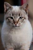 Крупный план кота Стоковая Фотография