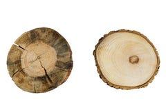 Крупный план колец дерева изолированный на белой предпосылке Стоковые Изображения