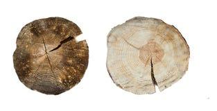 Крупный план колец дерева изолированный на белой предпосылке Стоковое фото RF