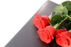 Крупный план красных роз на компьтер-книжке изолированной на белой предпосылке Стоковые Фото