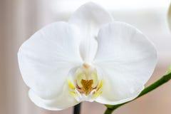 Крупный план красочного цветка Стоковое Изображение RF