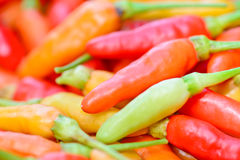 Крупный план красочной свежей группы перцев Стоковое Изображение RF