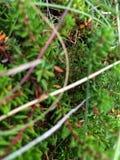 Крупный план макроса малых листьев папоротника Стоковые Фото