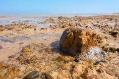 Крупный план меньшего камня на пляже во время отлива Стоковое Изображение RF