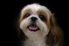 Крупный план милой собаки стороны Стоковая Фотография