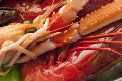 Крупный план морепродуктов Стоковое Фото