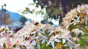 Крупный план мухы на цветках стоковая фотография rf