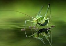 Крупный план насекомого Стоковые Фото