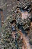 Крупный план на мухе Стоковые Фотографии RF