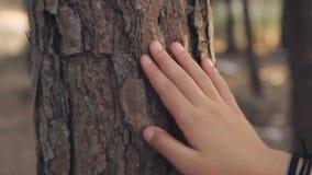 Крупный план на руке маленькой девочки тот касаться на стволе дерева в лесе