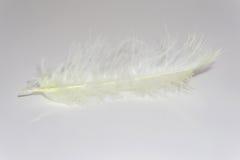 Крупный план нежного палевого пера цыпленка на белой таблице Стоковое фото RF