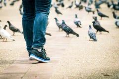 Крупный план ног женщины идет с голубем в предпосылке Стоковое Фото