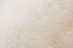 Крупный план овец шерстей Стоковое фото RF