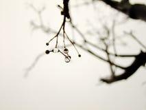 Крупный план дождевых капель на дереве Стоковое Фото