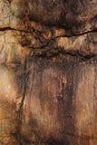 Крупный план окаменелого ствола дерева как текстурированное красочное backgroun Стоковые Фото