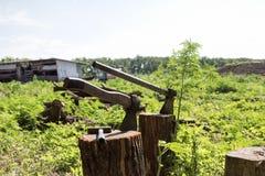 Крупный план оси на предпосылке зеленой травы Стоковое Фото