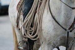 Крупный план лошади ковбоя Стоковая Фотография RF