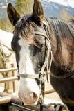 Крупный план лошади, сторона лошади, красивая лошадь, животноводческая ферма, Стоковое Фото